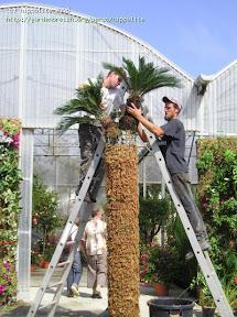 idée : colonne de sphaigne. cycas démontable ou définitif même système que les murs végétaux exposition Derbez 2006