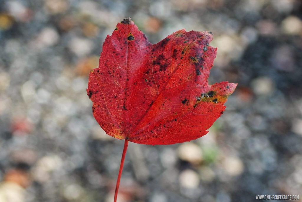 [leaf%5B10%5D]