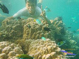 pulau harapan timur jauh 29-30 nov 2014 caklung 31