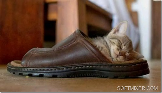 kitten-slipper