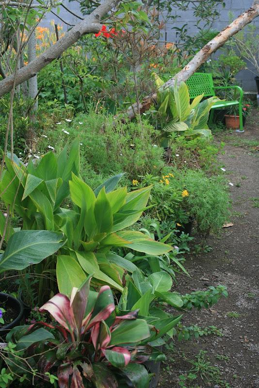Futur jardin d'orchidées!!! IMG_3595