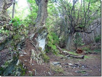 Ushuaia_Parque-Nacional-Terra-do-Fogo-Lengas