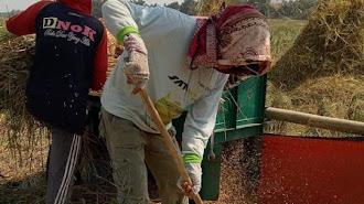 Peran Bulog Serap Gabah Petani Karawang di Anggap Rendah