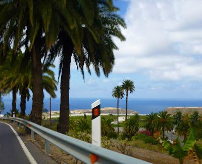 Palmen im Norden Gran Canarias