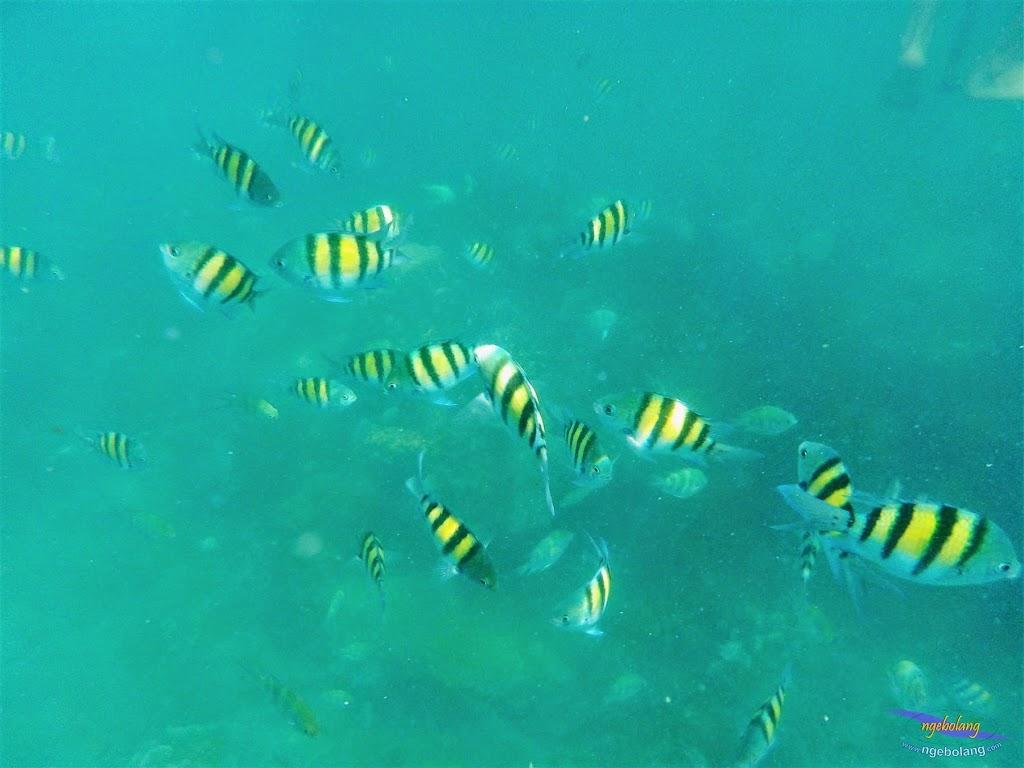 pulau harapan, 23-24 mei 2015 olympus 03