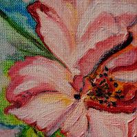 Rose Peony wild flower
