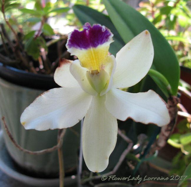 [05-08-tree-orchid%5B5%5D]