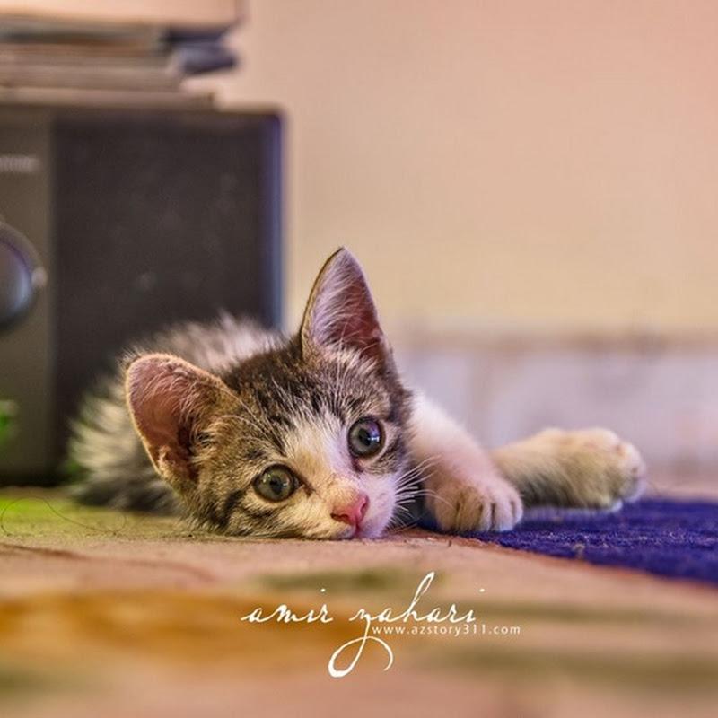 Firmax3 Merawat Kucing Tempang Dalam Masa 3 Hari