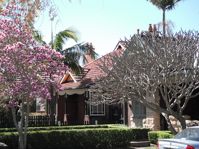 Magnolia in bloom and wintering frangipanni at 9 Boomerang Street, note framing palms