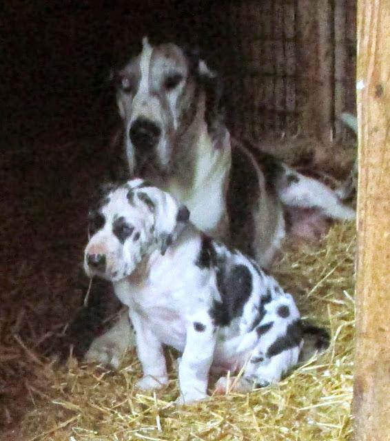 Savanna & her babies @ 6 weeks