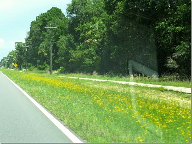 wildflowersIMG_0952