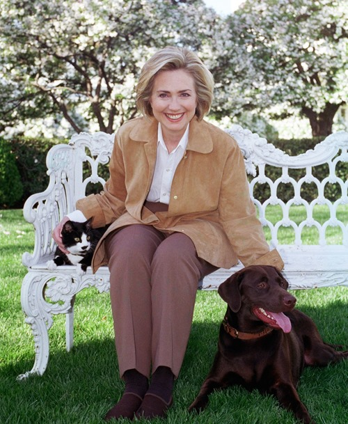 hillary cat and dog