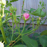 Gardening 2010 - 101_1275.JPG