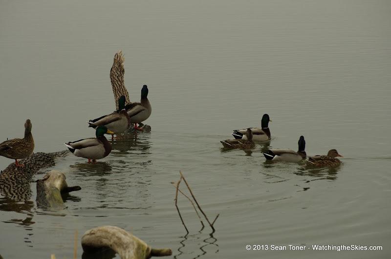 01-26-13 White Rock Lake - IMGP4318.JPG