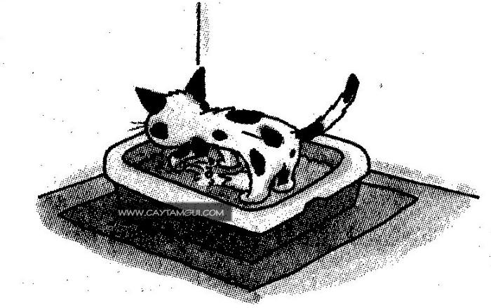 Tại sao mèo hay chùi mặt và lắp phân sau khi đi vệ sinh?