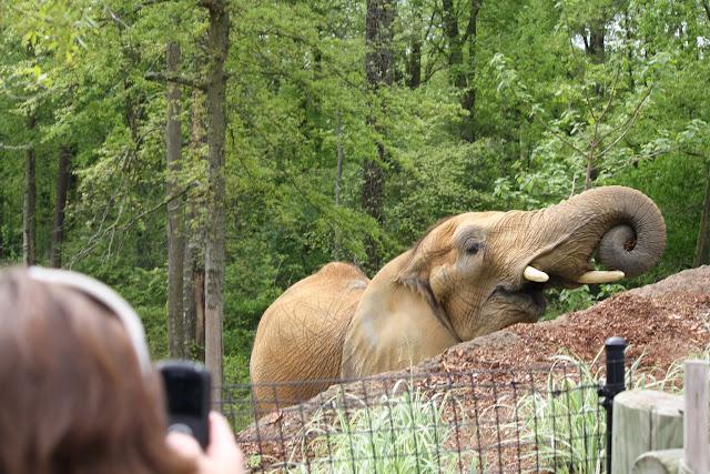Zoo Snooze 2015 - IMG_7277.JPG