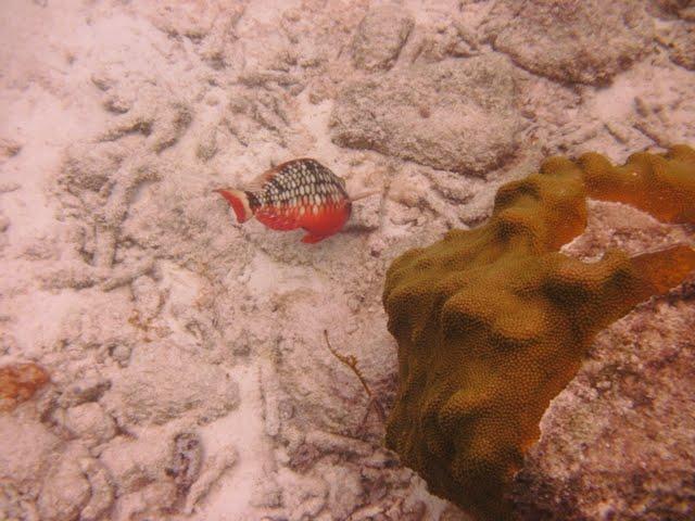 Bonaire 2011 - PICT0063.JPG