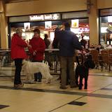 KNON puppys in de stad nov 2008 - DSC09020.JPG