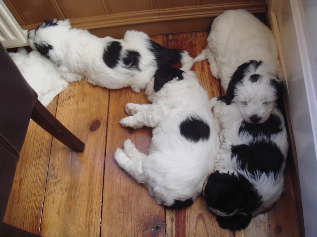 Pups Anne 2011 (5)