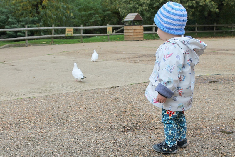 baby-looking-at-pigeons