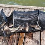 20140517_Fishing_Bochanytsia_038.jpg