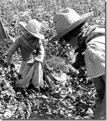 Elroe Kimbrell (Myrtle's grandson) and Sylvia Lawrence (daughter-in-law) picking cotton.