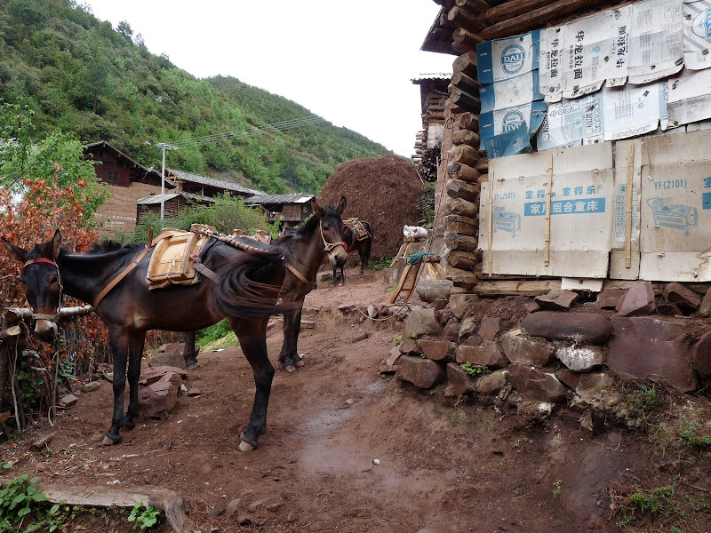 Chine . Yunnan.SHA XI 2 et retour à Lijiang - P1250324.JPG