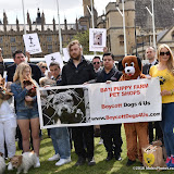 OIC - ENTSIMAGES.COM - Protesters at the Puppy Farming Protest - demonstration and photocall 24th May 2016, rally and photocall in London's Parliament Square to raise awareness of the UK's cruel puppy farming trade, in association with PupAid, Boycott Dogs4Us and C.A.R.I.A.D.  Photo Mobis Photos/OIC 0203 174 1069