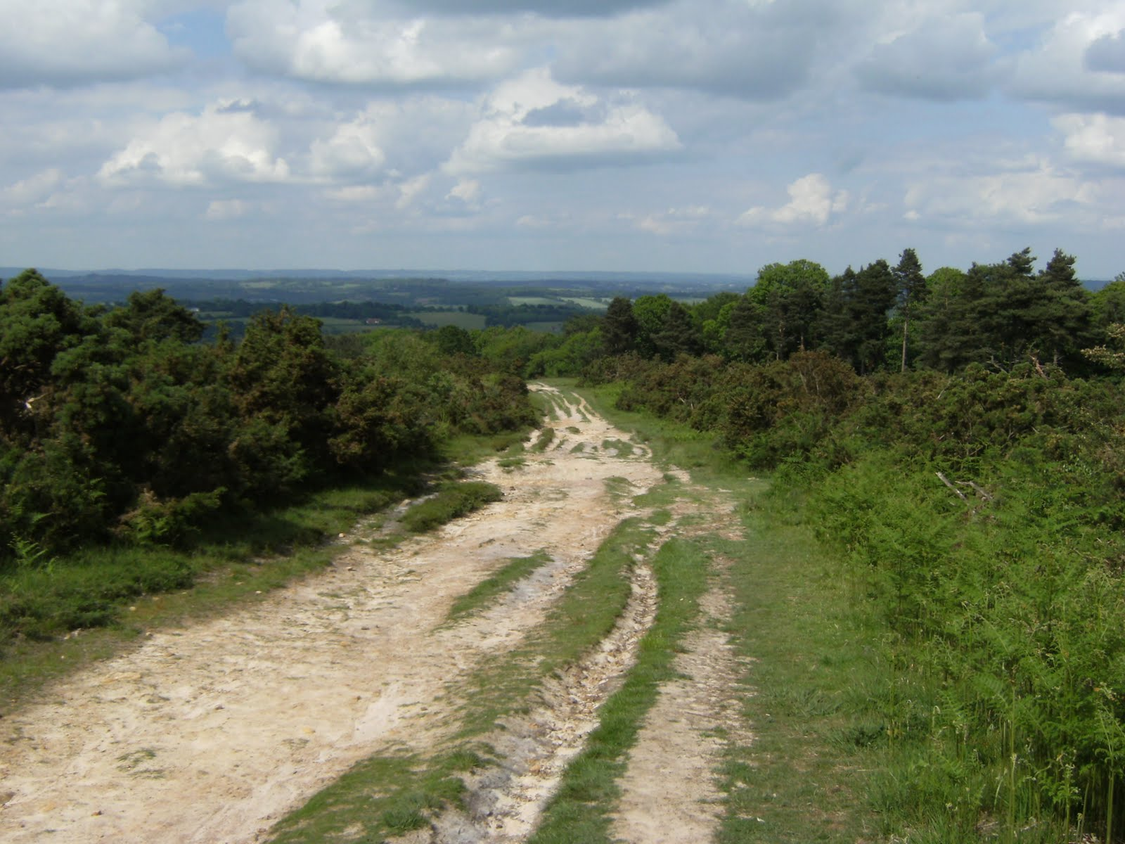 1006120055 Ashdown Forest
