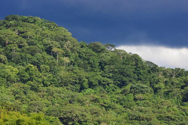 Le Soberania National Park (Canal Zone, Panamá), 1er novembre 2014. Photo : J.-M. Gayman