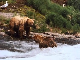 River of the Bears