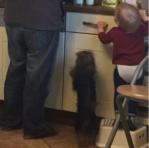 Kind und Hund helfen beim Frühstück