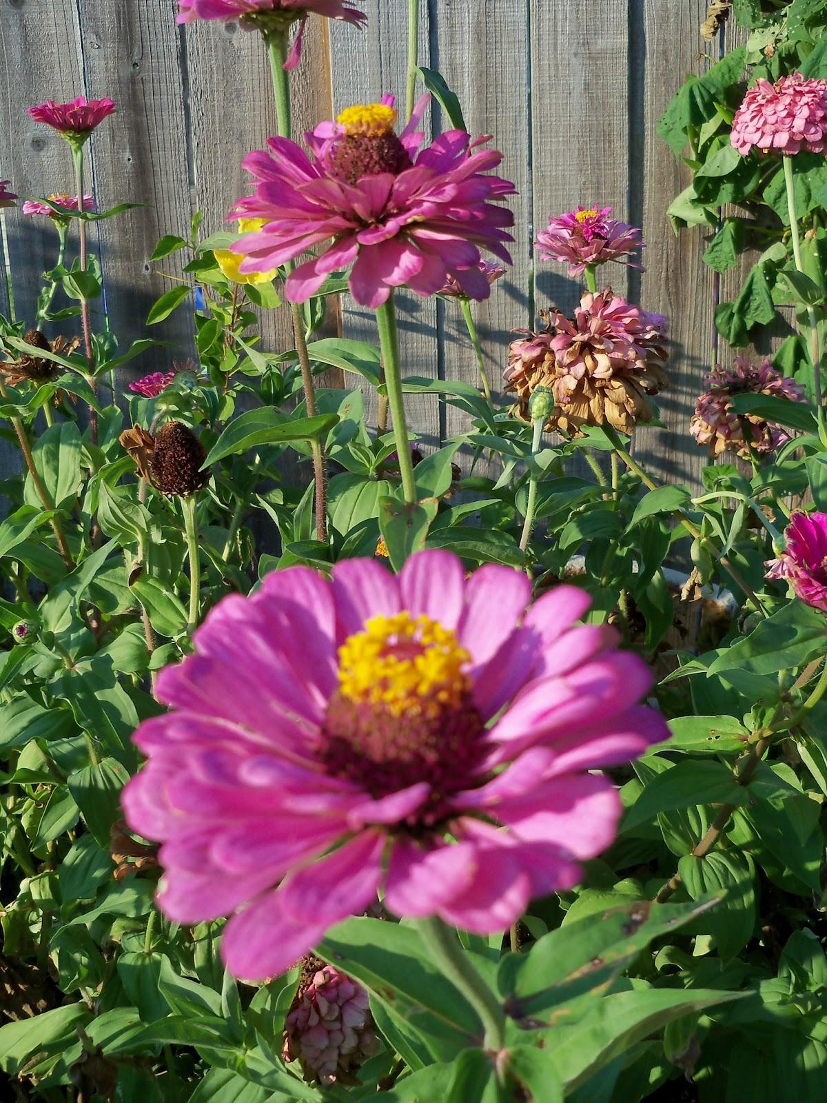 Gardening 2011 - 100_9233.JPG
