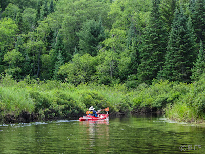 Paddling down the Moose River