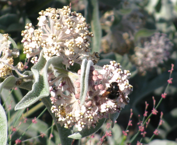 more bees on a flower