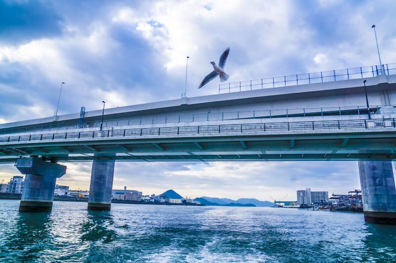 Hiroshima Miyajima World Heritage Sea Route seagulls3