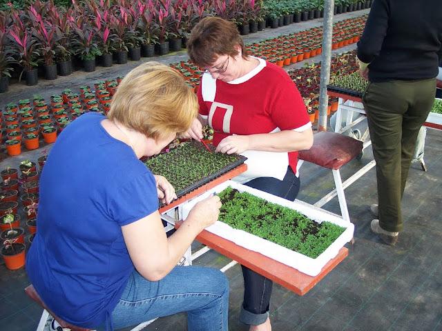cultivo de plantas florales anuales - backup%2Bcamara%2B144.jpg