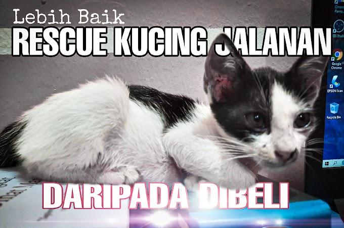 Lebih Baik Rescue Kucing dari Jalanan Daripada Beli