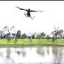 Vídeo surpreendente mostra falcão jogando cobra em meio a almoço de família; assista