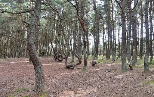 dancing-forest-kaliningrad-7