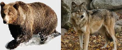 wolf%2Bbear.jpg