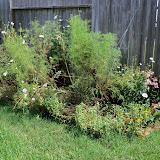 Gardening 2010, Part Three - 101_5068.JPG
