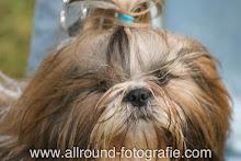 Huisdierreportage Hondendag Uden Dierendag (4 oktober 2008) - 18