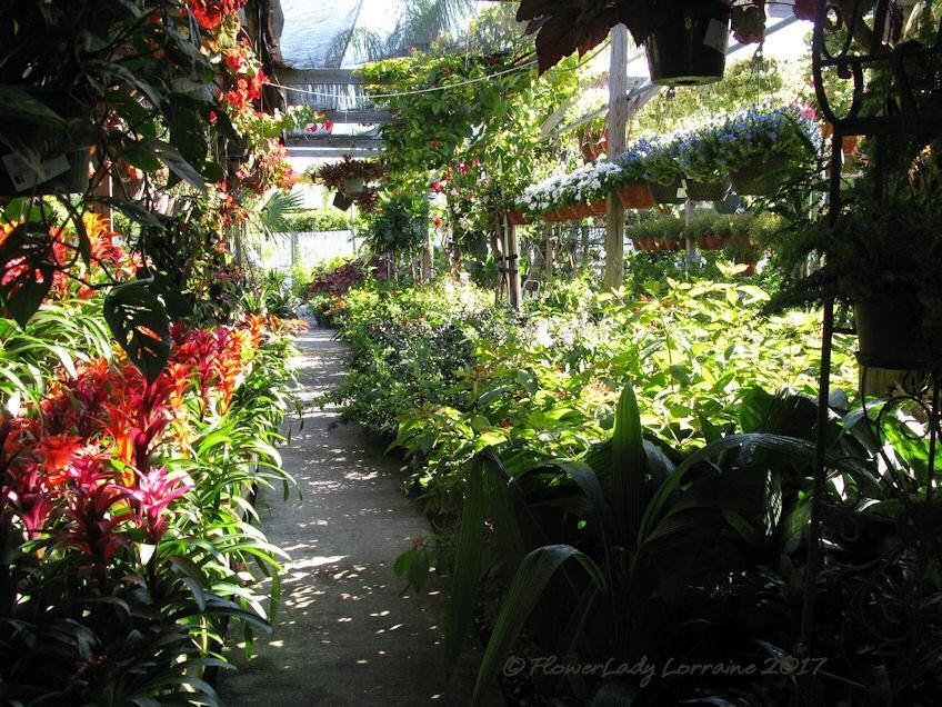 [05-08-flowers2%5B4%5D]