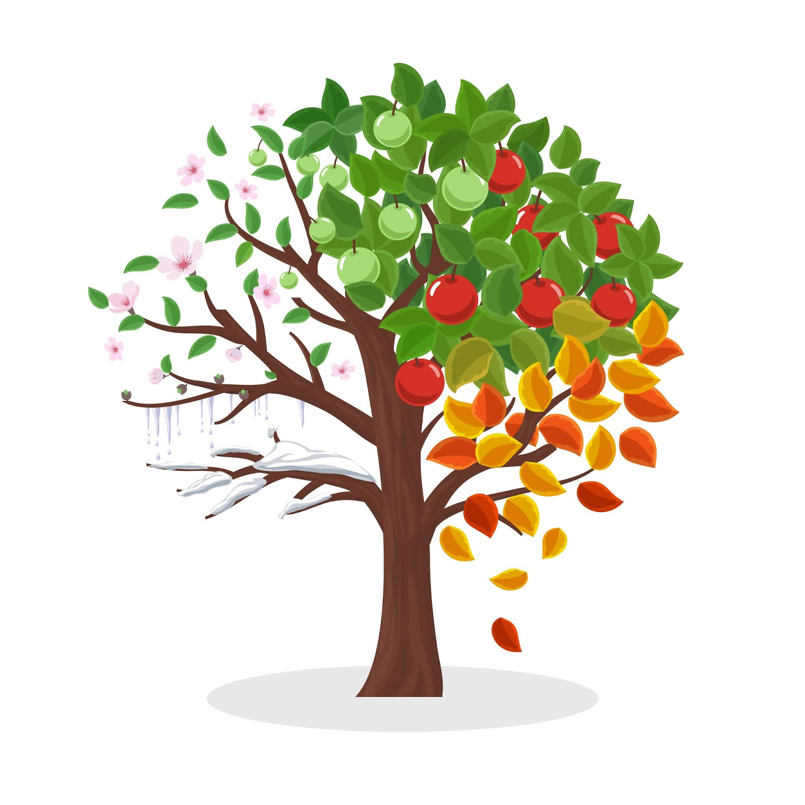 Seasons Tree Spring Summer Autumn Free Download Vector CDR, AI, EPS and PNG Formats