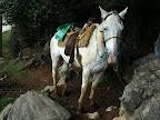 Reiten zum Indianerdorf