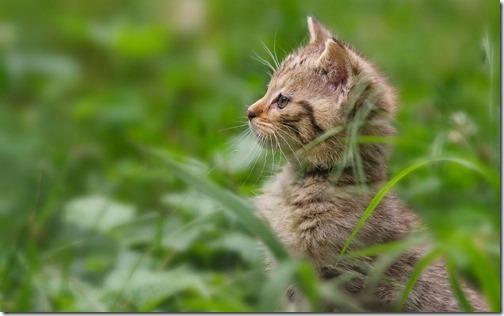 fotos de gatos (30)