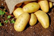 cara membuat masker kentang untuk kecantikan diri