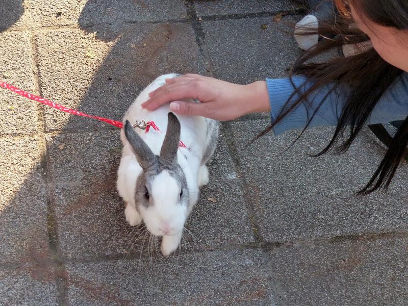 La mode des lapins