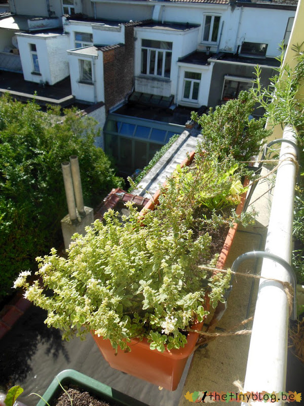 My balcony urban vegetable garden July 2015 in Brussels